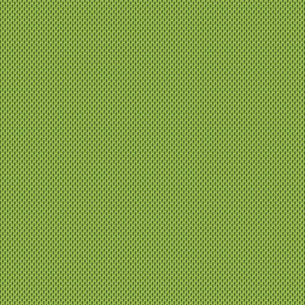 Kiwi - UNY05
